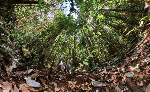 Cagou New Caledonia